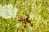 picture of ant  - Ant colony carrying food back to the nest - JPG