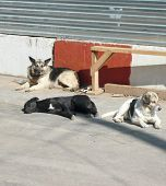 picture of stray dog  - image of stray dogs on street at day