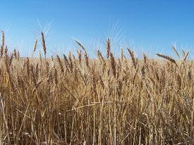 foto of western nebraska  - Hi - JPG