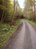 Forest Road During Autumn Day poster