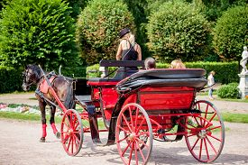 foto of carriage horse  - The girl  - JPG