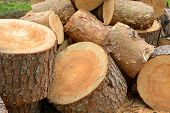 Постер, плакат: Sawn Pine Logs Heap