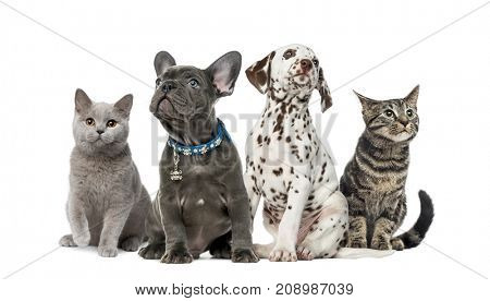 poster of Dog and cat, Group of kittens and puppies sitting, isolated on white