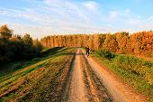Cycling, mountain bikeing woman on cycle trail in autumn forest. poster