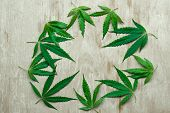 The Leaves Of Marijuana, Herbs, And Cannabis Lie In A Circle Forming A Good Background For Your Insc poster
