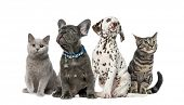 Dog and cat, Group of kittens and puppies sitting, isolated on white poster