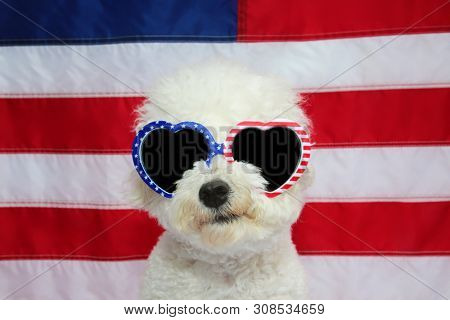 poster of Bichon Frise Dog and American Flag. Small White Bichon Frise dog wears American Flag Glasses. 4th of