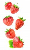 Isolated Strawberries. Flying Whole Strawberry Fruits Isolated On White Background With Clipping Pat poster