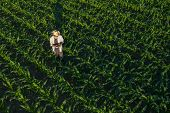 Corn Farmer With Drone Remote Controller In Field. Using Modern Innovative Technology In Agriculture poster