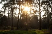 Sun Gazing In European Forest Background Wallpaper Fine Art Prints poster