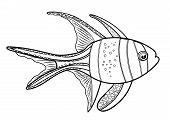Banggai Cardinal Fish, Line Silhouette Cartoon Hand Drawn Sea Animal, Contour Maritime Character, Co poster
