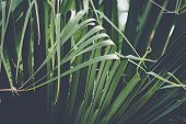 Close Up Of Palm Leaves Nature Background. Nature Background Of Palm Leaves. Palm Tree Leaves Nature poster