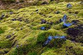 Eldhraun Lava Field In Iceland poster
