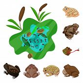 Vector Illustration Of Frog And Anuran Sign. Collection Of Frog And Animal Stock Vector Illustration poster