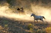 foto of buckaroo  - Two Cowboys galloping and roping through the desert - JPG