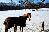 stock photo of blanket snow  - horse in warm blanket on winter pasture covered with snow - JPG