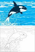 image of grampus  - orca leaping out of the water in a polar sea - JPG