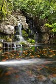 stock photo of koi fish  - Koi fish in pond at the garden with a waterfall - JPG