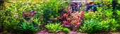 picture of freshwater fish  - A green beautiful planted tropical freshwater aquarium with fishes - JPG