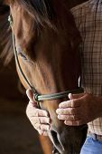 stock photo of animal husbandry  - kind farmers hands holding horses head - JPG