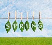 stock photo of impaler  - leaf impaled on a rope spring concept - JPG