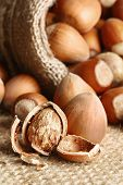 picture of hazelnut  - Hazelnuts pouring out from a linen bag macro shot - JPG