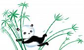 image of wind blown  - Panda sitting on bamboo blown away by the wind - JPG
