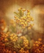 Rowan berry grunge background, abstract floral backdrop, beautiful little yellow berry on the branch