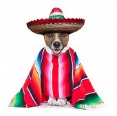 stock photo of mexican-dog  - mexican dog with sombrero and a big poncho - JPG