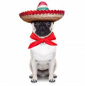 picture of sombrero  - mexican dog with big sombrero hat and red tie - JPG
