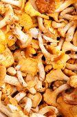 stock photo of chanterelle mushroom  - Raw fresh chanterelle mushrooms at farmers market - JPG