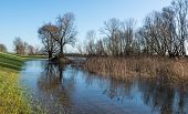 picture of dike  - A new dike and bare trees in the wetlands of a Dutch nature reserve on a sunny day in winter - JPG