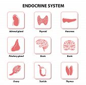 Постер, плакат: Endocrine System Set Icons
