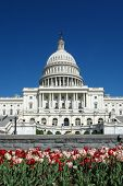 stock photo of laws-of-attraction  - Washington DC in Spring  - JPG