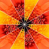 foto of symmetrical  - Flower Center Symmetric Collage Made of Collection of Gerbera Flowers - JPG
