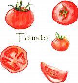 picture of tomato plant  - Watercolor illustration with red ripe hand drawn tomatoes - JPG