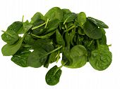image of leafy  - Fresh spinach it is a leaf vegetable or leafy green - JPG