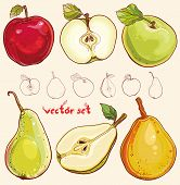 image of freehand drawing  - Bright vector illustration of fresh apples and pears - JPG