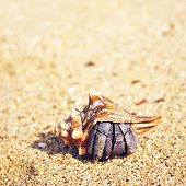 picture of hermit  - hermit crab on a beach in Andaman Sea - JPG