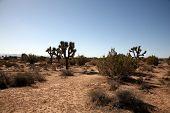 pic of sand gravel  - California Desert in Death Valley with Joshua Trees - JPG