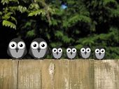 stock photo of bird fence  - Comical bird family perched on a timber garden fence against a foliage background - JPG