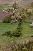 pic of neglect  - Neglected car in the field with a flowering tree - JPG