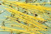foto of bay leaf  - Spaghetti - JPG