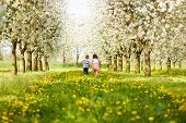 stock photo of orchard  - Boy goes with the girl in a blossoming orchard - JPG