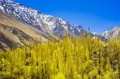 image of karakoram  - Idyllic of Mountain and Valley in Northern area of Pakistan - JPG