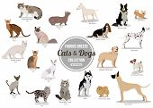 ������, ������: Set of flat sitting or walking cute cartoon dogs and dogs Popular breeds Flat style design isolate