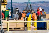 Fishermen weighing the catch at Homer, Alaska harbor