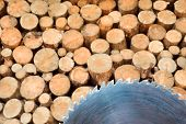 Pile Of Firewood. Sawmill Blade With Wall Firewood Background. Logging For Winter. Wall Firewood, Ba poster