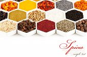 pic of barberry  - collection of spices - JPG