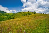 Blooming Wild Flowers On Pasture In Mountain Summer Landscape poster